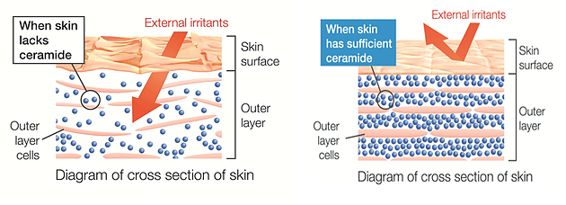 Ceramides-skin care-diagram-meaning-how-do-they-work